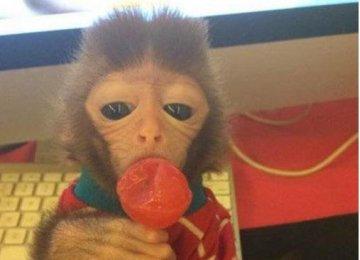 2万买个石猴当作宠物,随时小心它要去你的命