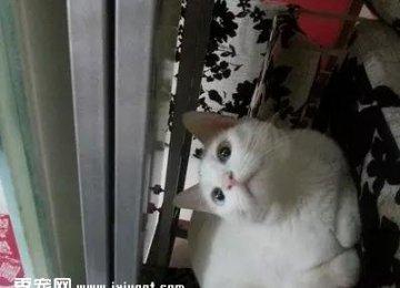 猫咪为何喜欢用爪子搞破坏,怎么办?